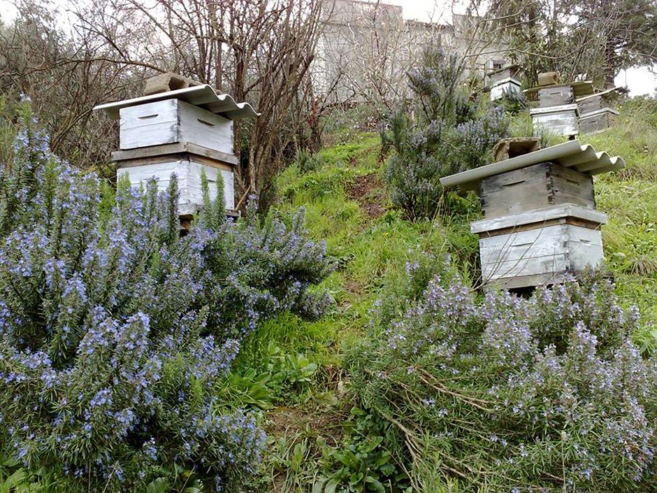 Kamal Smaili - apiculteur à Tirmitin en Algérie