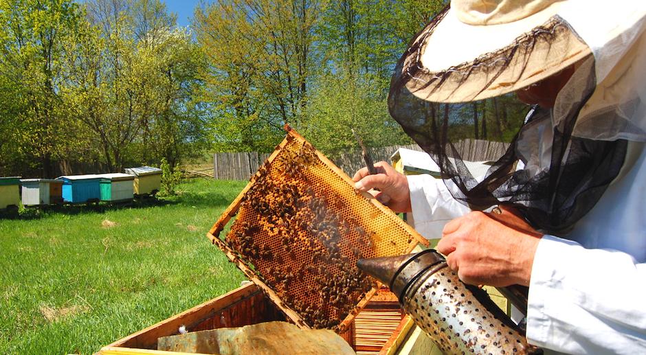 Cri d'alarme du monde apicole
