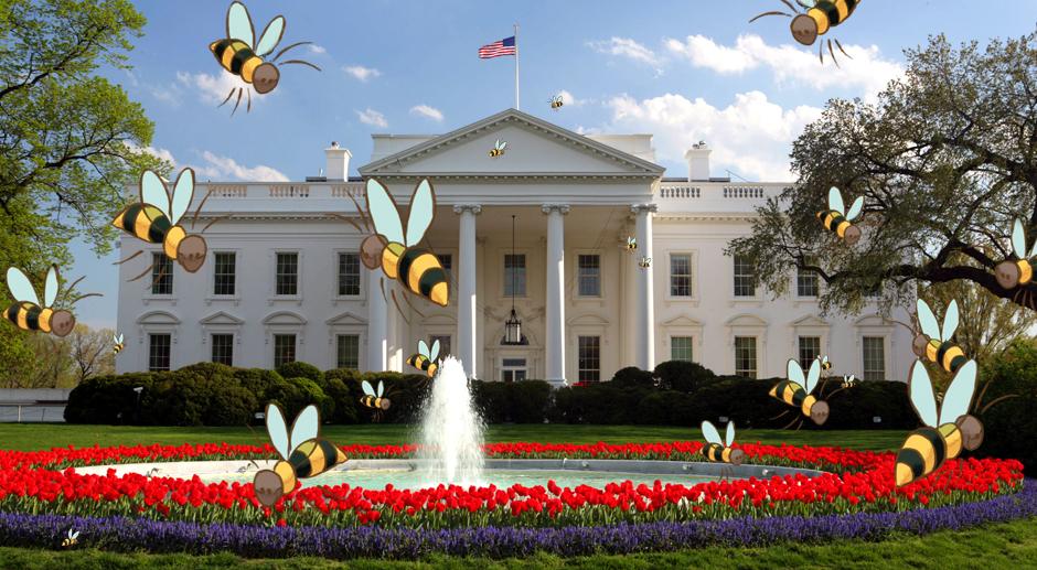 la maison blanche d voile un plan pour sauver les abeilles apis ceraapis cera. Black Bedroom Furniture Sets. Home Design Ideas