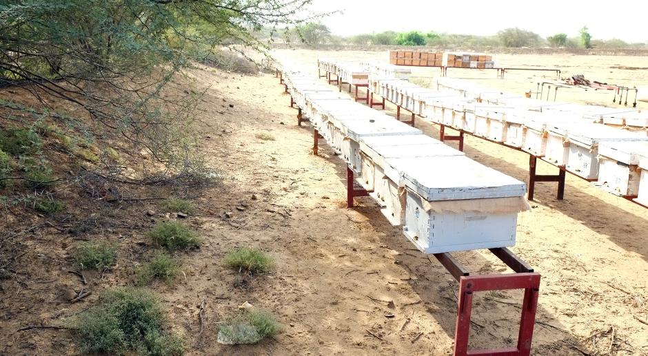 Talal Jassim Almughrub - Beekeeper in Saudi Arabia