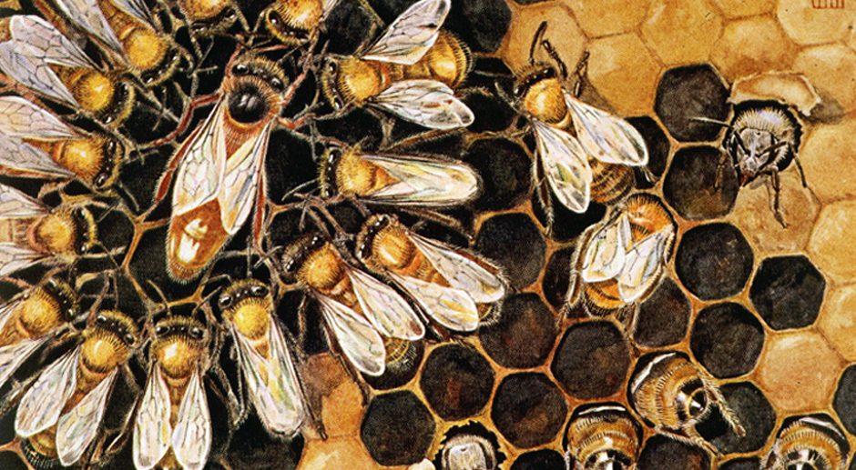 Les habitants de la ruche : la Reine