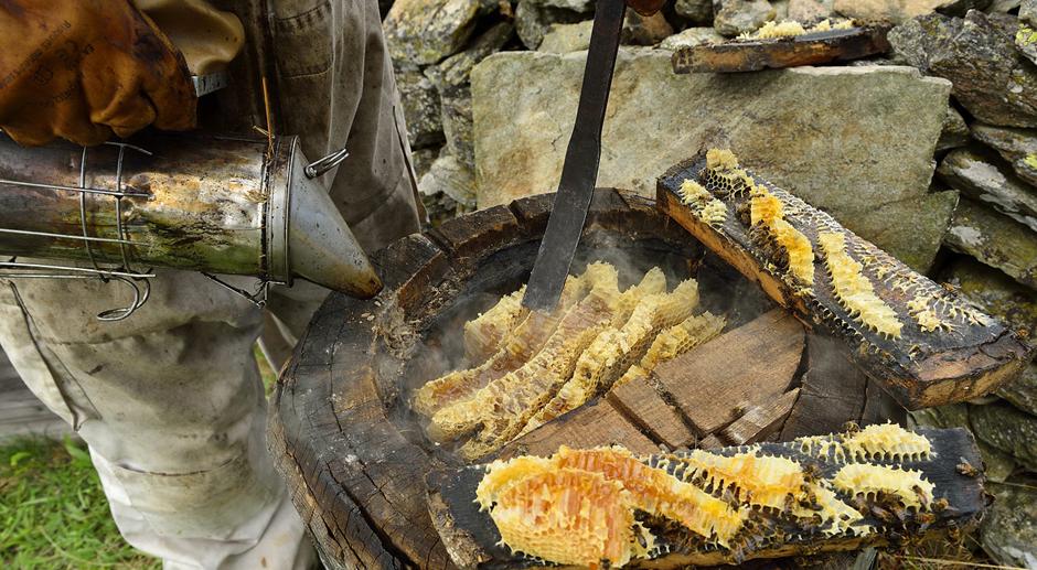 [Obrazek: ruche-tronc-miel-matthieu-dupont.jpg]