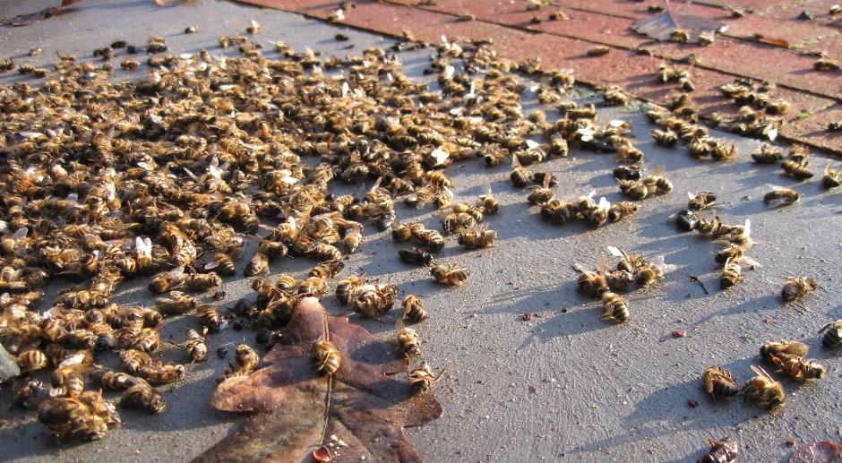 Des millions d'abeilles mortes après l'épandage d'insecticide anti-Zika