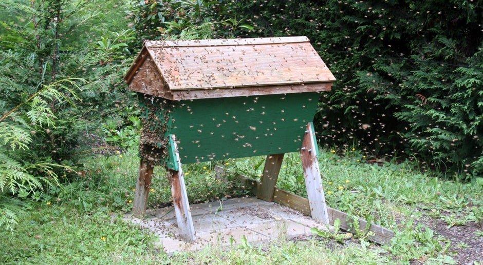 Ruche horizontale kenyane Top Bar Hive