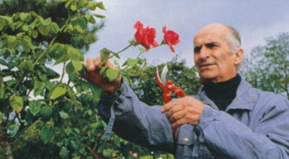 La rose Louis de Funès