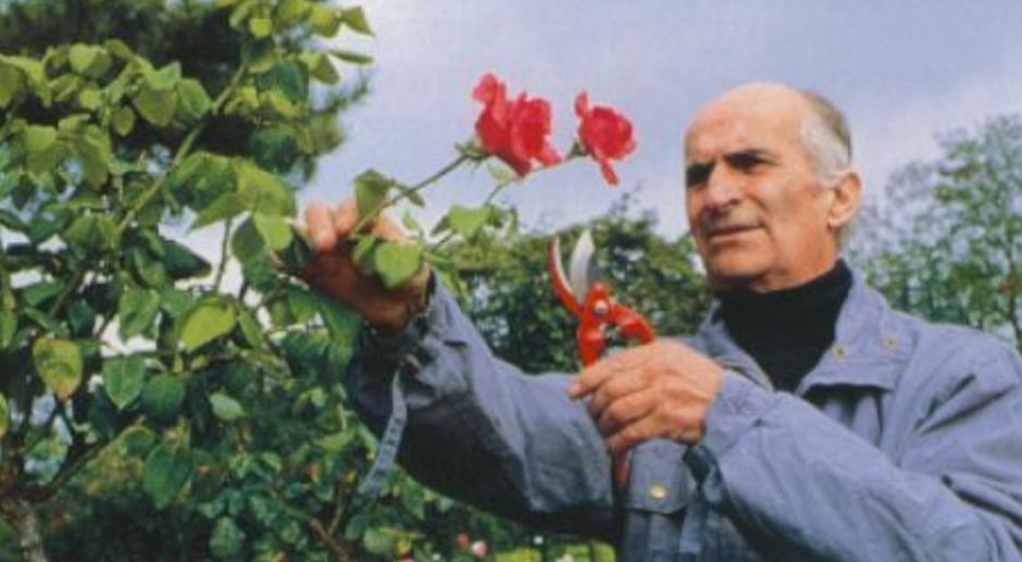 La rose Louis de Funès