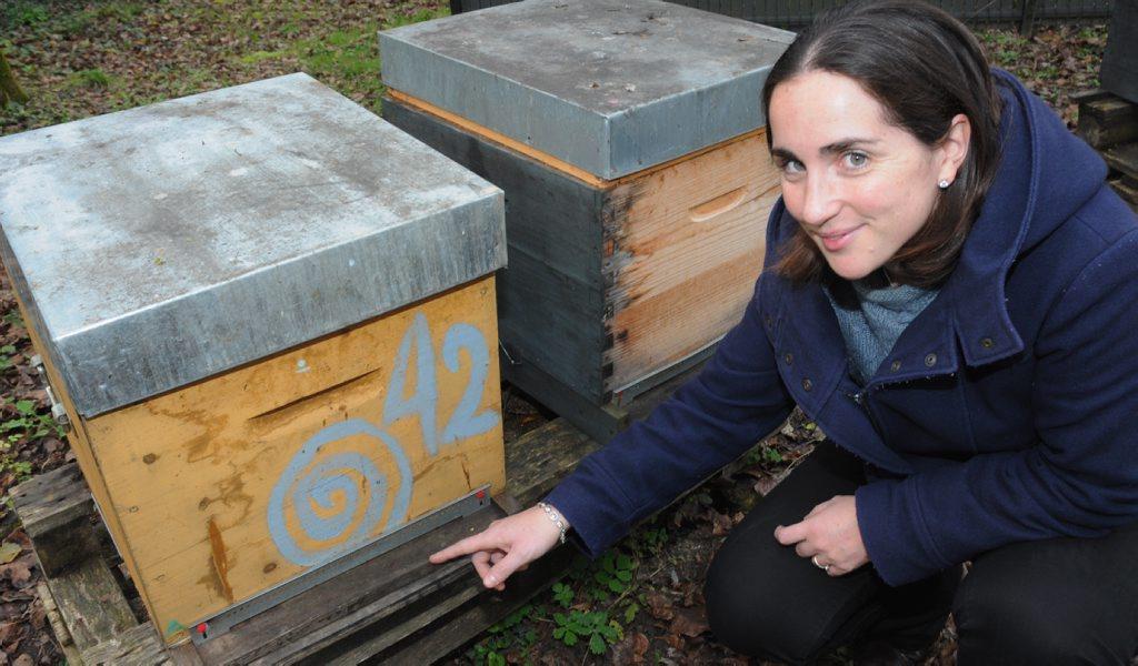 Aurore Avarguès-Weber et ses ruches