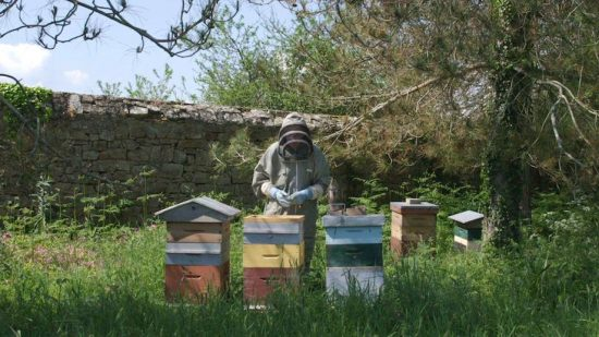 « Avec mes abeilles » , un film d'Anne Burlot et Glenn Besnard