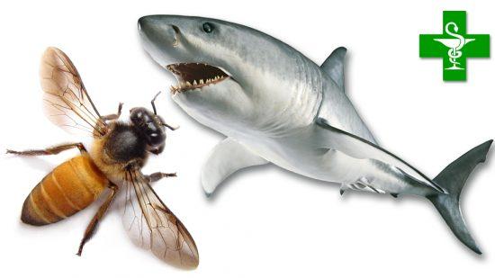 Des abeilles ou des requins au service des malades de Parkinson ?