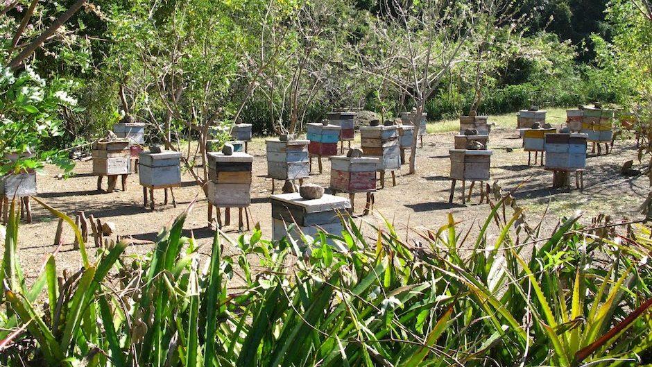 Cuba : l'île bio où le miel coule à flot