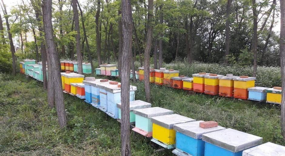 En Albanie, la moitié des abeilles a disparu en une seule année