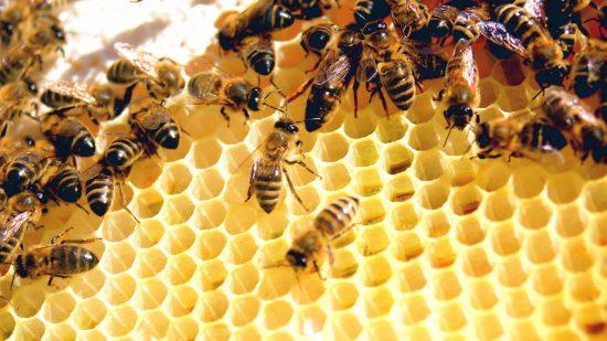 2016, la pire année pour la production de miel en France