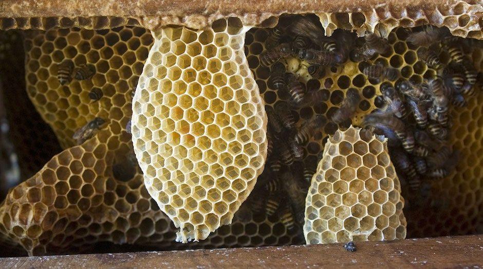 Les abeilles mathématiciennes