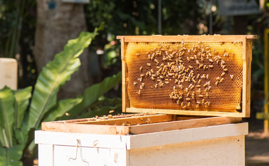The hive and the beeswax