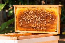 Bougies en pure cire d'abeille et savons au miel