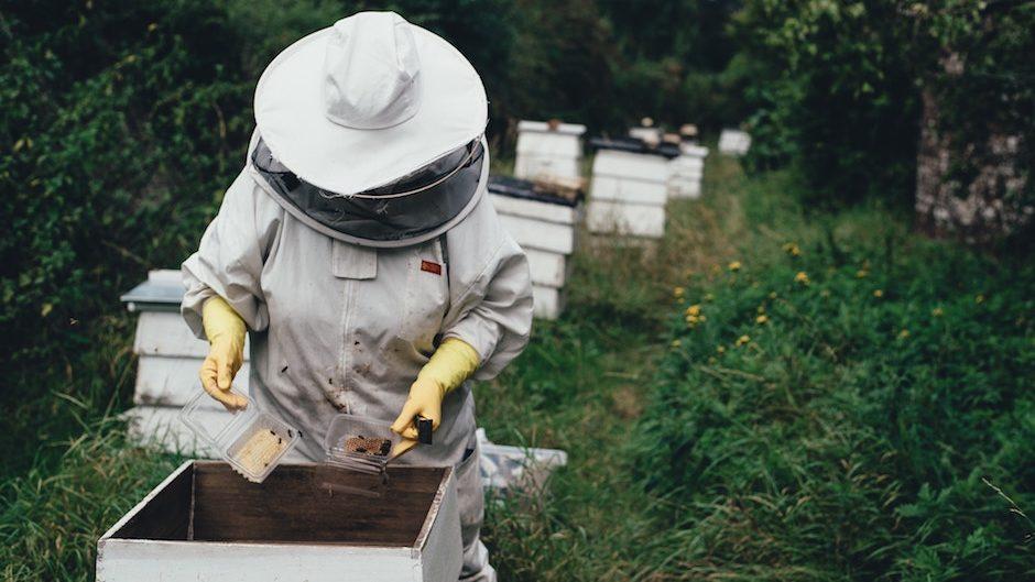 La bataille des apiculteurs français contre les contrebandiers du miel