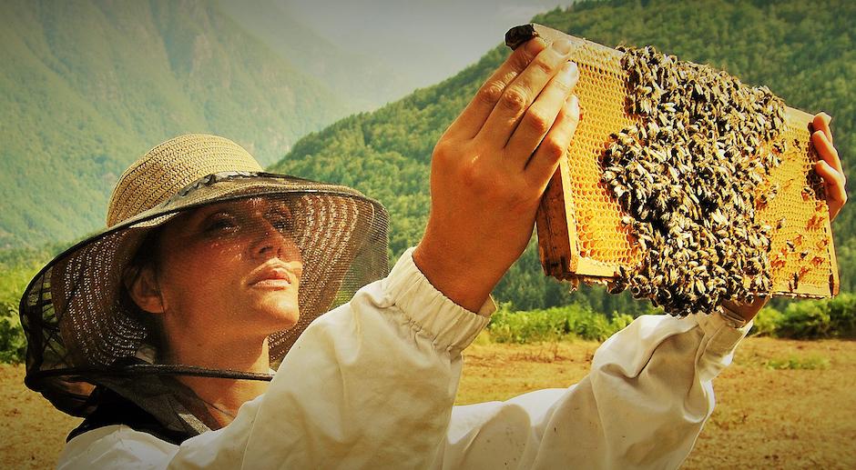 Venez découvrir les délicieux miels de Caroline Davelu