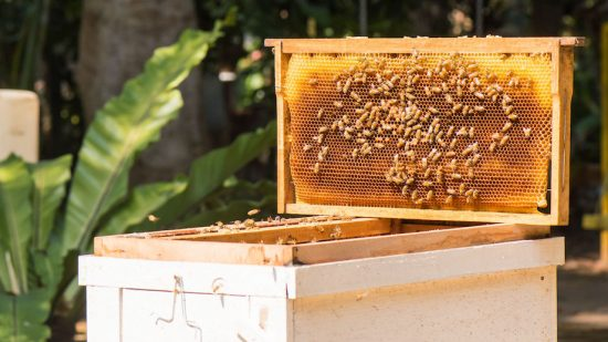 Are Lithuanians obsessed with bees?