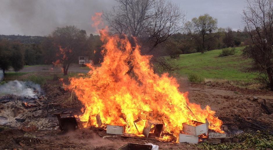 Pesticides : des apiculteurs contraints de brûler leurs ruches