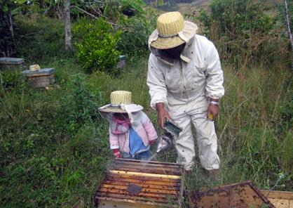 apiculteur au Madagascar