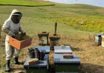 apiculteur à Nagoya