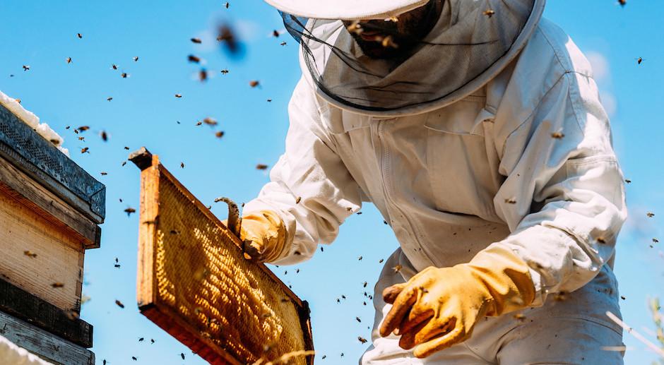 La canicule : un impact très négatif sur la production de miel